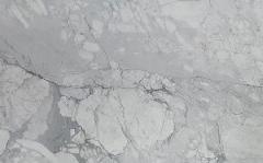 Statuario Marble Honed